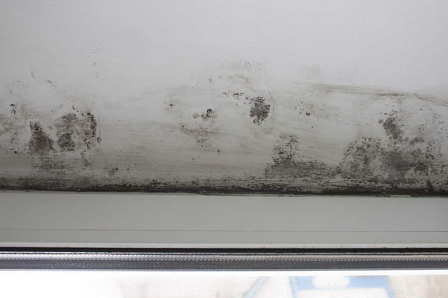 How To Properly Identify Black Mold